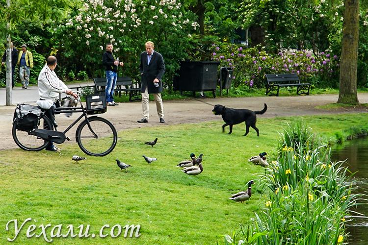 Голландия, Амстердам, парк Вондела.
