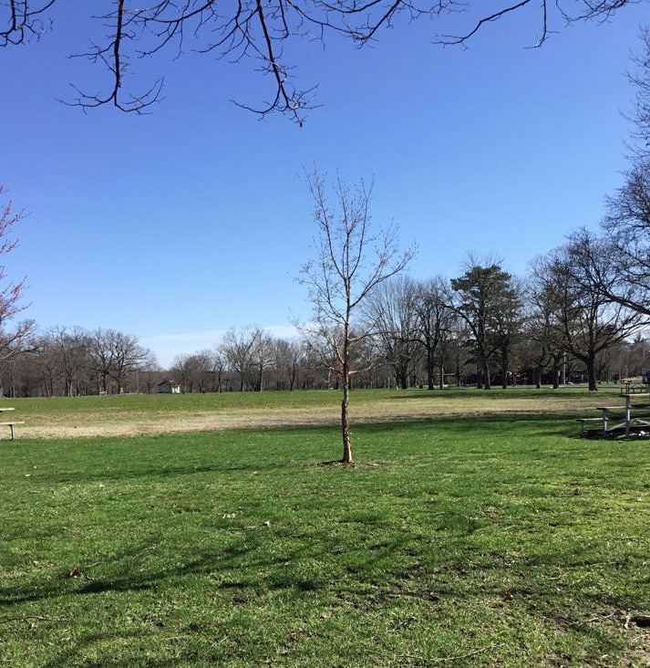 Фото городского парка в Иллинойсе