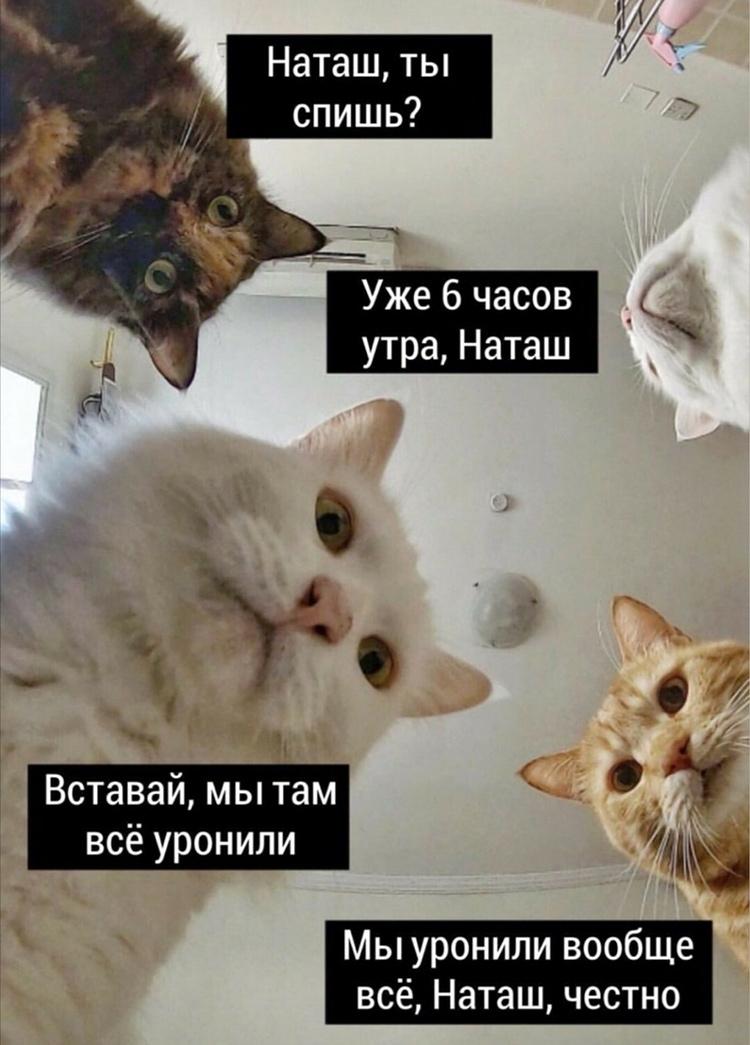 Коты, которые все уронили. Вообще всё.