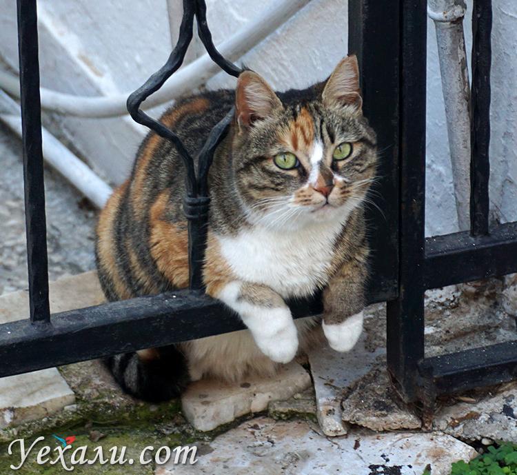 Кошка в Каше, Турция.