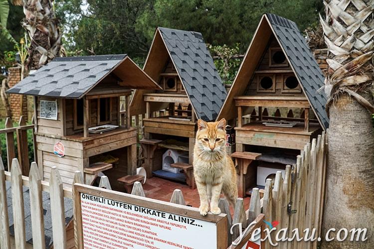На фото: домик для кошек в Алании, Турция.